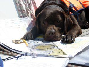 De hond van Jachtmakelaar Monnickendam